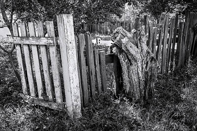 Photograph - Its Functional by Denise Dube