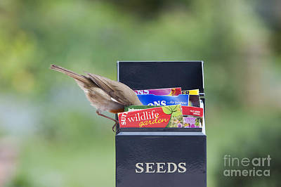 Feeding Bird Photograph - Its In Here Somewhere by Tim Gainey