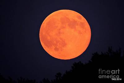 Photograph - It's Only A Paper Moon ? by Tami Quigley