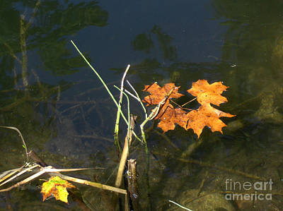 Photograph - It's Over - Leafs On Pond by Brenda Brown