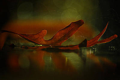Photograph - Its Raining Fall  by Tammy Schneider