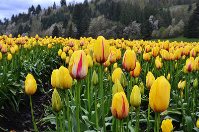 Photograph - It's Spring by Ansel Price