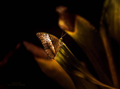 Photograph - Its The Simple Things By Denise Dube by Denise Dube