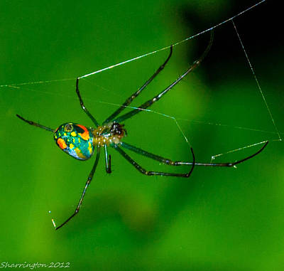Photograph - Itsy Bitsy 2 by Shannon Harrington