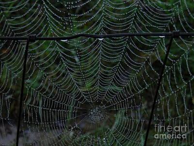 Bitsy Photograph - Itsy Bitsy's Spider Web by Amy Stuart Langlo