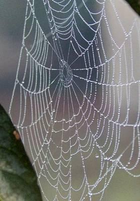 Ittsy Bittsy Spider Art Print by John Glass