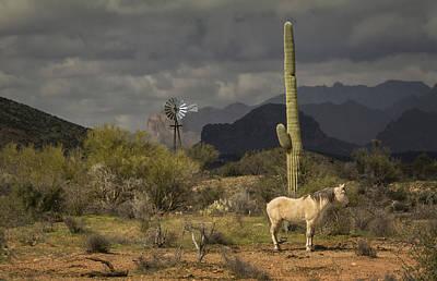 Photograph - I've Been Through The Desert On A Horse With No Name by Saija  Lehtonen