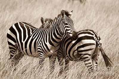 Photograph - I've Got Your Back by Chris Scroggins