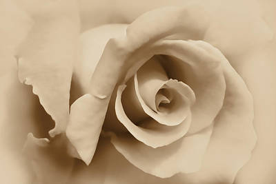 Photograph - Ivory Brown Rose Flower by Jennie Marie Schell