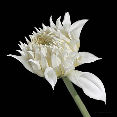 Ivory Dahlia Flower In The Beginning Art Print by Jennie Marie Schell