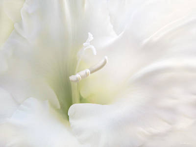 White Flowers Photograph - Ivory Gladiola Flower by Jennie Marie Schell