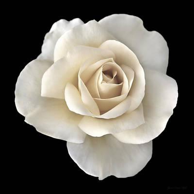 Ivory Rose Flower Portrait Art Print by Jennie Marie Schell