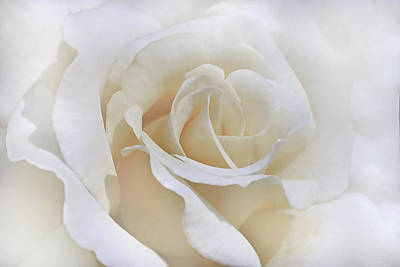 Photograph - Ivory Rose In The Clouds by Jennie Marie Schell