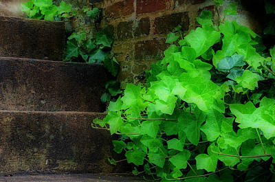 Photograph - Ivy Along Stairs by Steve Hurt