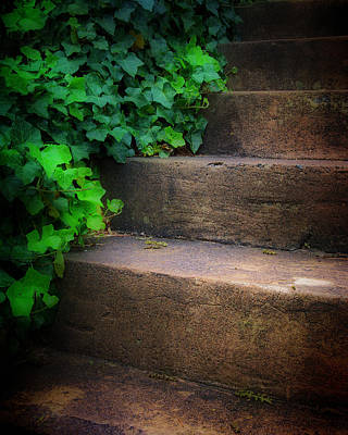 Ivy Beside Steps Art Print by Steve Hurt