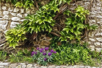 Photograph - Ivy Covered Stone Wall W0798  by Wes and Dotty Weber