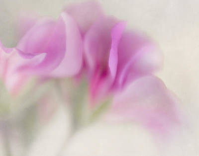 Photograph - Ivy Geranium Abstract IIi by David and Carol Kelly