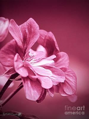 Photograph - Ivy Geranium by J McCombie