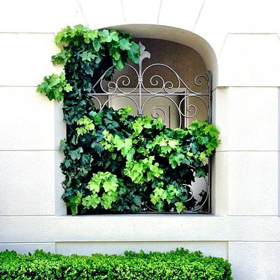 Green Wall Art - Photograph - Ivy by Julie Gebhardt