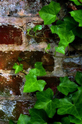 Photograph - Ivy On Bricks by Steve Hurt