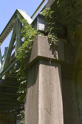 Photograph - Buffalo River Bridge Of Ivy. by Danielle Allard