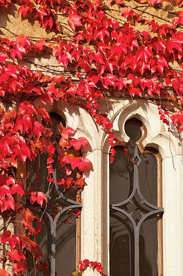 Dresden Wall Art - Photograph - Ivy On Wall Germany by Michael Defreitas