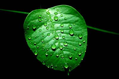 Photograph - Ivy Rain by David Weeks