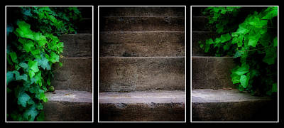 Photograph - Ivy Steps Triptych  by Steve Hurt