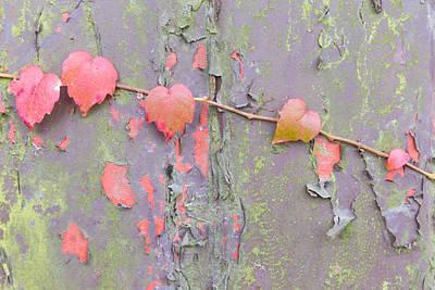 Ivy Vs Paint Art Print by Semmick Photo