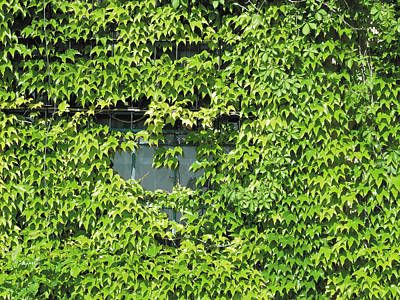 Photograph - Ivy Window 2 by The Art of Marsha Charlebois
