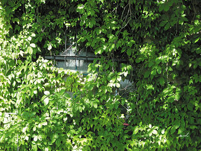 Photograph - Ivy Window by The Art of Marsha Charlebois