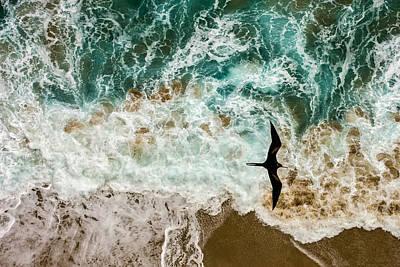 Iwa Photograph - Iwa Flight  by Mike  Neal
