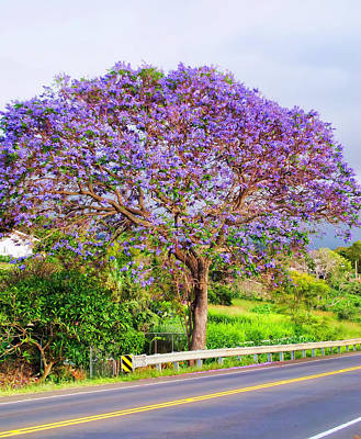 Photograph - Jacaranda 4 by Dawn Eshelman
