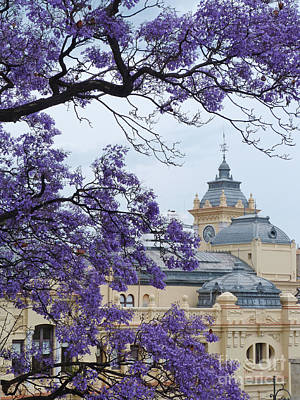 Photograph - Jacaranda Blossoms - Malaga City Hall by Phil Banks