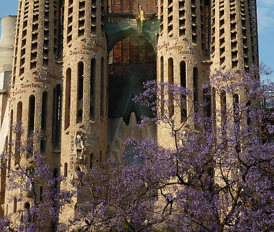 Jacaranda In Barcelona Art Print by Christine Burdine