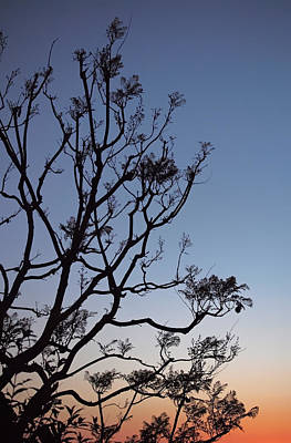 Photograph - Jacaranda Sunset by Rona Black