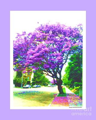 Digital Art - Jacaranda Tree by Marlene Rose Besso