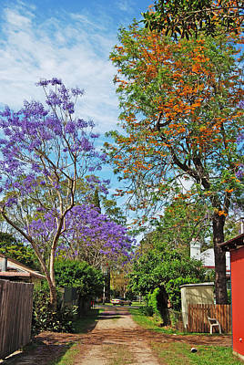 Photograph - Jacaranda Walk by Ankya Klay