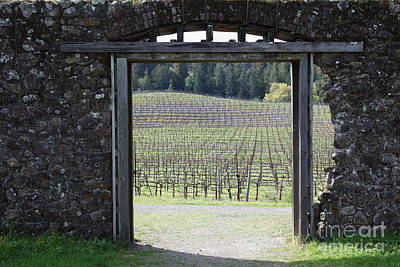 Pastoral Vineyard Photograph - Jack London Ranch Winery Ruins 5d22132 by Wingsdomain Art and Photography