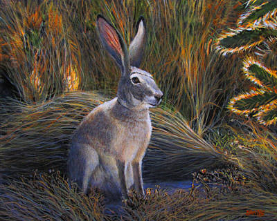 Jack Rabbit In The Brush Art Print by Charles Wallis