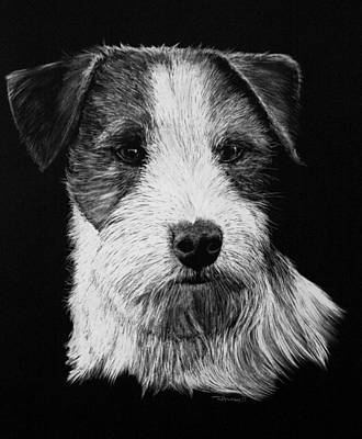 Drawing - Jack Russell Terrier - Rough Coat by Rachel Hames