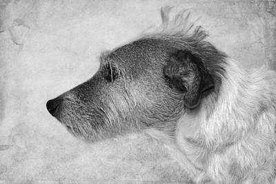 Best Friend Photograph - Jack Russell With A Mohawk  by SharaLee Art