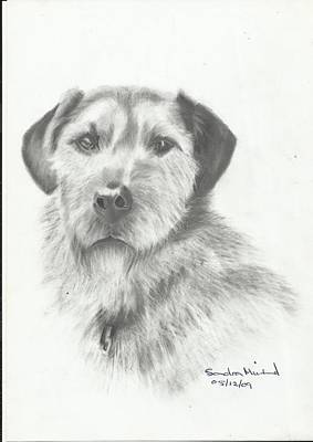 Drawing - Jack by Sandra Muirhead