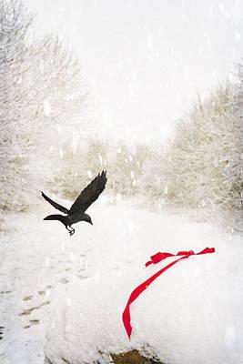 Jackdaw In Snow Art Print by Amanda Elwell