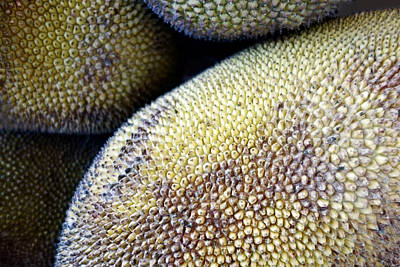 Photograph - Jackfruit by Ann Powell