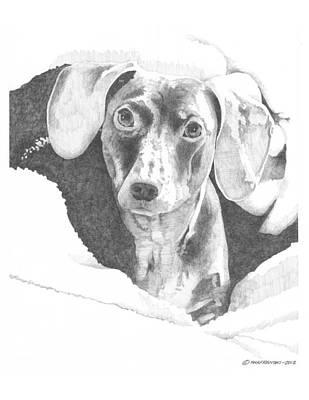 Dachsund Drawing - Jackson by Paul Shafranski