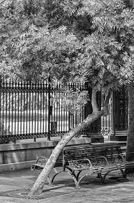 Photograph - Jackson Square Bench And Tree by Jim Shackett