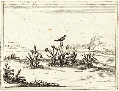 Thistle Drawing - Jacques Callot, French 1592-1635, Bird Perched On A Thistle by Litz Collection