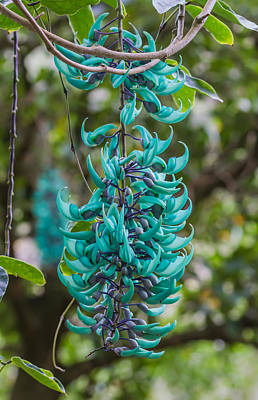 Jade Vine Flower Art Print by Kelly Headrick
