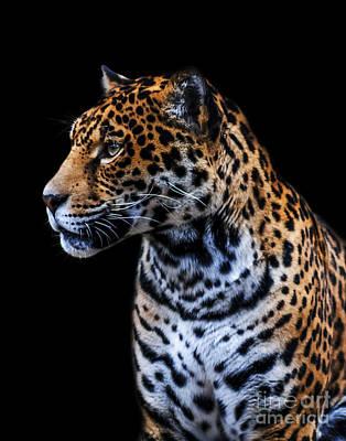 Photograph - Jaguar A One by Ken Frischkorn